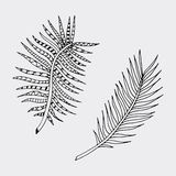 Hand drawn isolated fern. Stock Photography