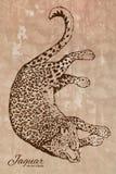 Hand drawn jaguar vector drawing Royalty Free Stock Photos