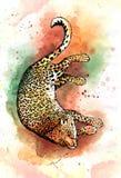 Hand drawn jaguar watercolor drawing Stock Photos