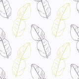 Hand drawn kaffir lime branch flowers Royalty Free Stock Photography