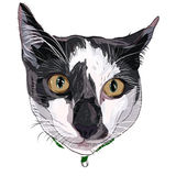 Hand-drawn kitty face Stock Photo