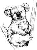 Hand drawn koala Royalty Free Stock Photo