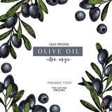 Hand drawn label of extra virgin black olive oil. Vector colored vintage art. Set of farm vegetables. Organic sketched. Vegetarian objects. Use for restaurant vector illustration