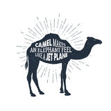 Hand drawn label with textured camel vector illustration and lettering. Royalty Free Stock Photo