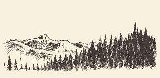 Hand drawn landscape fir forest and meadow sketch. Hand drawn landscape with fir forest and meadow, vintage vector illustration Stock Photo
