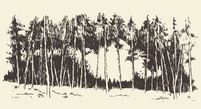 Hand drawn landscape fir forest meadow vector. Hand drawn landscape with fir forest and meadow vintage vector illustration Royalty Free Stock Photos