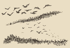 Hand drawn landscape flying birds forest vintage. Hand drawn landscape flying birds fir forest vintage Royalty Free Stock Image