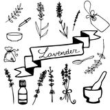 Hand drawn lavander set Stock Images