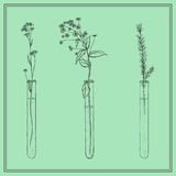 Hand drawn lavender plants, Flowers in vitro, vial, in frame Royalty Free Stock Images