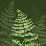 Hand drawn leaf of a fern. Hand drawn green grass (leaves of a fern Royalty Free Stock Photos