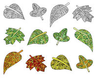 Hand drawn leaf illustrations Stock Photography