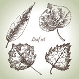 Hand drawn leaf set Stock Image