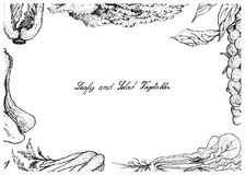 Hand Drawn of Leafy and Salad Vegetable Royalty Free Stock Photography