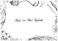 Hand Drawn of Leafy and Salad Vegetable Stock Images
