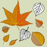 Hand Drawn Leaves Stock Photos