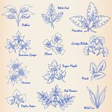 Hand Drawn Leaves Icon Set Royalty Free Stock Photos