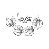 Hand drawn leaves Royalty Free Stock Photos