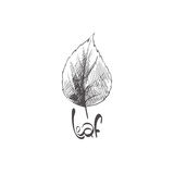Hand drawn leaves Royalty Free Stock Images