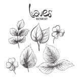 Hand drawn leaves Royalty Free Stock Image
