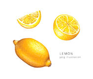 Hand drawn lemon set raster illustration. Stock Image