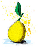 Hand drawn lemon Stock Photos