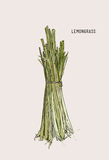 Hand drawn lemongrass . Hand drawn lemongrass branch with leaves  on white Royalty Free Stock Photography