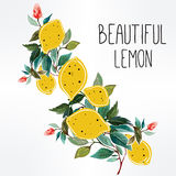 Hand drawn lemons on a branch background . Royalty Free Stock Photos