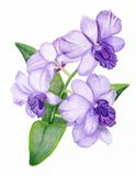 Hand-drawn lilac orchid branch. Beautiful pencilled lilac orchid branch Stock Images