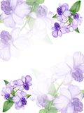 Hand-drawn lilac orchid invitation Royalty Free Stock Image