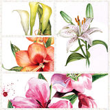 Hand drawn lilies Stock Image