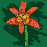 Hand drawn lily Royalty Free Stock Photo