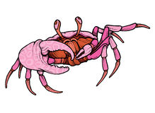 Hand drawn line art colorful crab Royalty Free Stock Photo