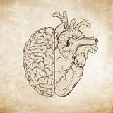 Hand drawn line art human brain and heart. Da Vinci sketches style over grunge aged paper background vector illustration. Logic and emotion priority concept Vector Illustration