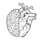 Hand drawn line art human brain and heart halfs - Logic and emotion priority concept. Print or tattoo design isolated on white bac. Kground vector illustration stock illustration