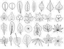 Outline leaves vector set. Hand drawn line leaves vector set of  grape, acacia, fern, elm, poplar, maple, bamboo, teak, tamarind, lotus, caladium, for nature Royalty Free Stock Images