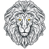 Hand drawn lion head . Banner, poster, card, t-shirt design template. Vector illustration Stock Image