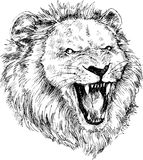 Hand drawn lion head Royalty Free Stock Photo