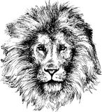 Hand drawn lion head Stock Image