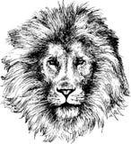 Hand drawn lion head Stock Image