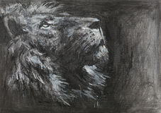 Hand drawn lion head. Hand drawn side view of lion looking up, charcoal and pastel technique Stock Images