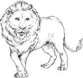 Hand drawn lion Stock Image