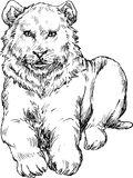 Hand drawn lion Royalty Free Stock Photo