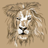 Hand drawn lion portrait close-up. Vector image. Royalty Free Stock Photography