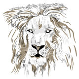 Hand drawn lion portrait close-up. Vector image. Royalty Free Stock Photo