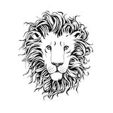 Hand drawn lions head isolated on white background Stock Photos