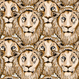 Hand drawn lions seamless pattern. Vector illustration on light brown background. Lion& x27;s head seamless pattern. Vector illustration on light brown royalty free illustration