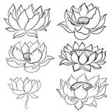 Hand drawn lotus isolate vector set and  Japanese tattoo Stock Photos