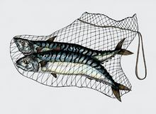 Hand drawn mackerels caught in the net Royalty Free Stock Photo