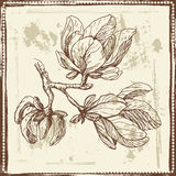 Hand drawn magnolia flowers sketch Stock Photo