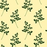 Hand drawn maidenhair pattern. Vector seamless pattern with hand drawn Maidenhair Fern twigs. Beautiful floral design elements,  ink drawing Royalty Free Stock Photography